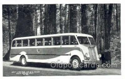 bus010122 - Gray Line Bus, Muir Woods, CA USA Bus Buses, Old Vintage Antique Post Card Postcard