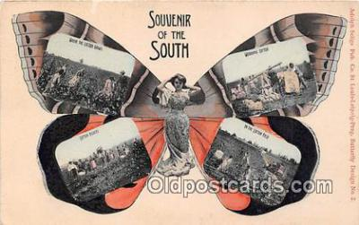 but000007 - Souvenir of the South, Cotton Field Adolph Selige Pub Co Postcard Post Card