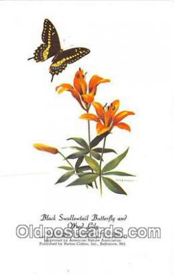but001122 - Black Swallowtail Butterfly & Wood Lily Artist RT Peterson Postcard Post Card