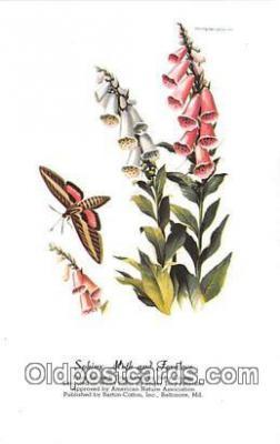 but001124 - Sphinx Moth & Foxglove Artist RT Peterson Postcard Post Card