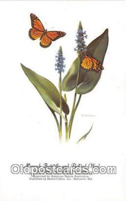 but001126 - Monarch Butterfly & Pickerel Weed Artist RT Peterson Postcard Post Card