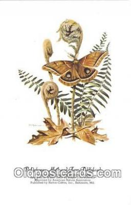 but001132 - Polyphemus Moth & Fern Fiddleheads Artist RT Peterson Postcard Post Card