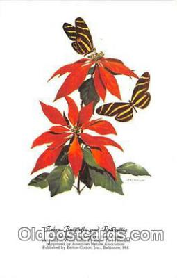 but001140 - Zebra Butterfly & Poinsettia Artist RT Peterson Postcard Post Card
