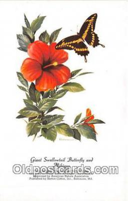 but001141 - Giant Swallowtail Butterfly & Hibiscus Artist RT Peterson Postcard Post Card