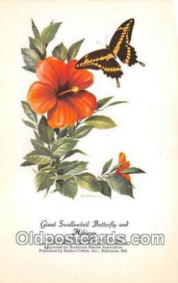 but001142 - Giant Swallowtail Butterfly & Hibiscus Artist RT Peterson Postcard Post Card