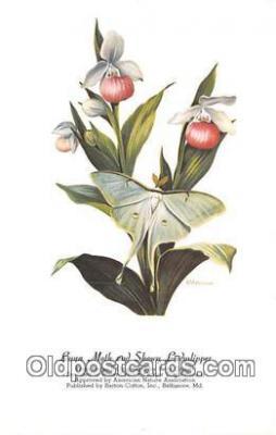 but001148 - Luna Moth & Showy Ladyslipper Artist RT Peterson Postcard Post Card