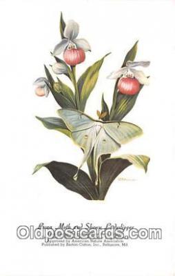 but001150 - Luna Moth & Showy Ladyslipper Artist RT Peterson Postcard Post Card