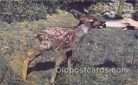 bbb001097 - California Wildlife  Postcard Post Card