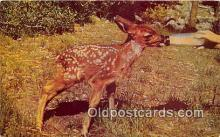 bbb001107 - Young Fawn Bottle Fed Postcard Post Card