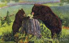 ber001011 - Bear Bears Postcard Post Card