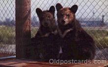 ber001086 - Moon ring bears Bear, Bears, Postcard Post Card