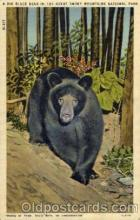ber001138 - Great Smoky Mountain National Park Bear Bears Postcard Post Card Old Vintage Antique