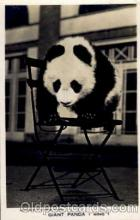 ber001142 - Ming Bear Bears Postcard Post Card Old Vintage Antique