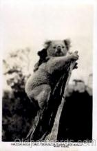 ber001148 - Bear Bears Postcard Post Card Old Vintage Antique
