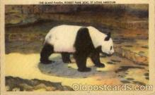 ber001155 - Forest Park Zoo, St. Louis, MO USA Bear Bears Postcard Post Card Old Vintage Antique