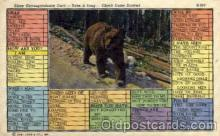 ber001160 - Bear Bears Postcard Post Card Old Vintage Antique