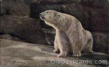 ber001167 - New York Zoological Park Bear Bears Postcard Post Card Old Vintage Antique