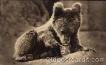 ber001171 - Golden Syrup Bear Bears Postcard Post Card Old Vintage Antique