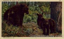 ber001173 - Adirondack, Mts, NY USA Bear Bears Postcard Post Card Old Vintage Antique