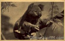 ber001180 - Bear Bears Postcard Post Card Old Vintage Antique