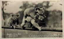 ber001183 - Bear Bears Postcard Post Card Old Vintage Antique