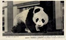 ber001187 - Ming Bear Bears Postcard Post Card Old Vintage Antique