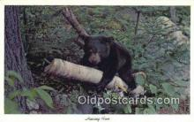 ber001189 - Having Fun Bear Bears Postcard Post Card Old Vintage Antique