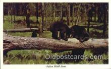 ber001191 - Native Wild Bear Bears Postcard Post Card Old Vintage Antique