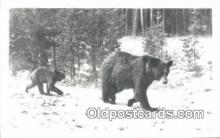ber001193 - Mother and Cub Hiking Bear Bears Postcard Post Card Old Vintage Antique