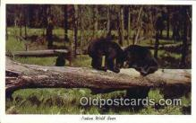 ber001195 - Native Wild Bear Bears Postcard Post Card Old Vintage Antique