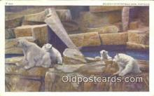 ber001196 - Brookfield Zoo, Chicago, Ill, USA Bear Bears Postcard Post Card Old Vintage Antique