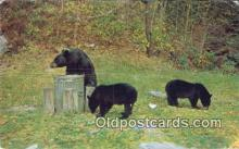 ber001201 - Blanchester, Ohio, USA Bear Bears Postcard Post Card Old Vintage Antique