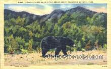 ber001202 - Great Smoky Mountain National Park Bear Bears Postcard Post Card Old Vintage Antique
