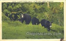 ber001204 - Great Smoky Mountain National Park Bear Bears Postcard Post Card Old Vintage Antique