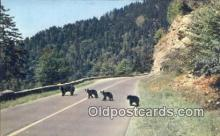 ber001205 - Great Smoky Mountain National Park Bear Bears Postcard Post Card Old Vintage Antique
