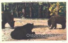 ber001206 - Bear Bears Postcard Post Card Old Vintage Antique