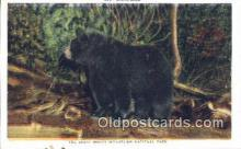ber001207 - Great Smoky Mountain National Park Bear Bears Postcard Post Card Old Vintage Antique