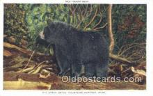 ber001208 - Great Smoky Mountain National Park Bear Bears Postcard Post Card Old Vintage Antique