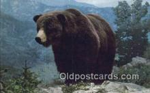 ber001214 - Colorado Grizzly Bear Exhibit USA Bear Bears Postcard Post Card Old Vintage Antique
