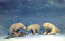 ber001216 - Colorado Grizzly Bear Exhibit USA Bear Bears Postcard Post Card Old Vintage Antique