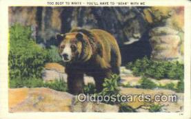 ber001217 - Bear Bears Postcard Post Card Old Vintage Antique