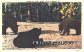ber001218 - Bear Bears Postcard Post Card Old Vintage Antique