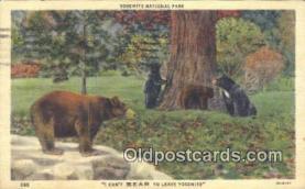 ber001225 - Yosemite National Park Bear Bears Postcard Post Card Old Vintage Antique