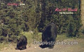 ber001226 - San Bernardino Mts. Cal USA Bear Bears Postcard Post Card Old Vintage Antique