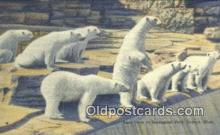 ber001227 - Zoological Park, Detroit, Michigan USA Bear Bears Postcard Post Card Old Vintage Antique
