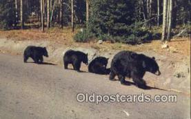 ber001229 - Bear Bears Postcard Post Card Old Vintage Antique