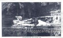 ber001230 - St. Louis Zoo. Mo, USA Bear Bears Postcard Post Card Old Vintage Antique
