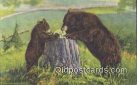 ber001233 - Bear Bears Postcard Post Card Old Vintage Antique