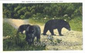 ber001236 - Great Smokies Tenn, USA Bear Bears Postcard Post Card Old Vintage Antique