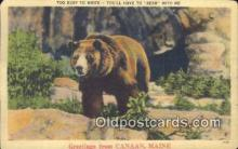 ber001237 - Canaan, Maine, USA Bear Bears Postcard Post Card Old Vintage Antique